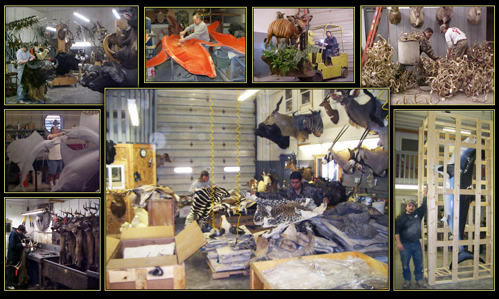 Northeast Taxidermy Studios - Located in Middletown, CT