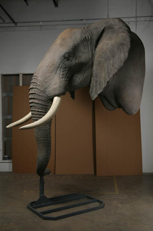 Elephant Replicas and Taxidermy