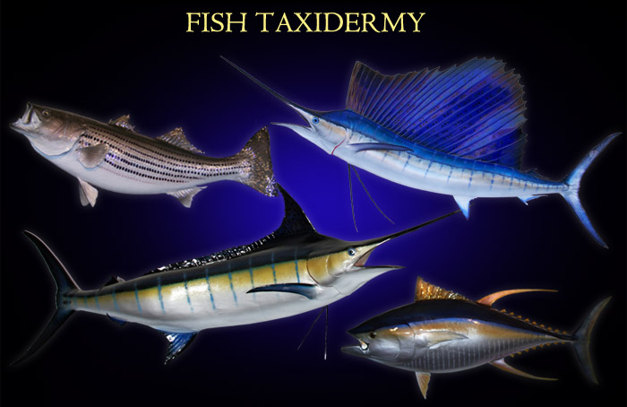 The Best Fish Taxidermy Available