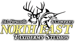 Northeast Taxidermy Studios - Since 1976