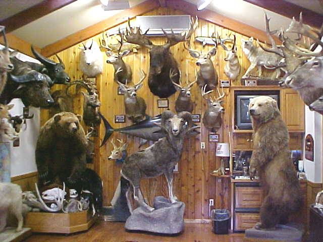 Big Game Hunting Trophy Rooms Images Frompo 1