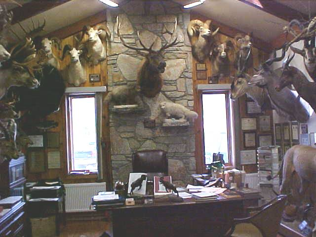 Trophy room services at northeast taxidermy studios for Trophy room design